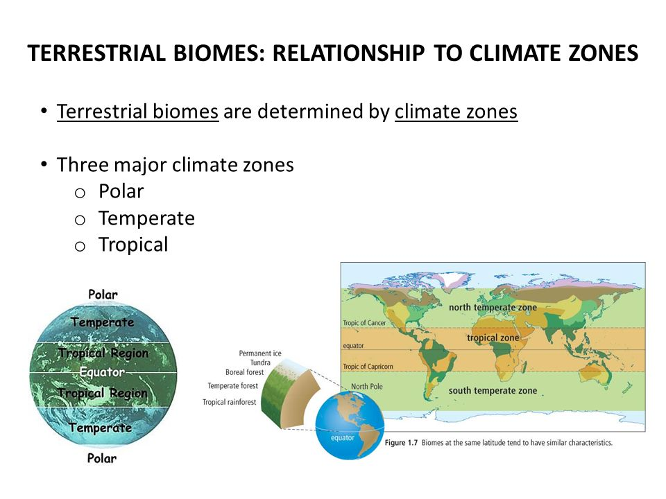 TERRESTRIAL BIOMES: RELATIONSHIP TO CLIMATE ZONES Terrestrial biomes are determined by climate zones Three major climate zones o Polar o Temperate o Tropical