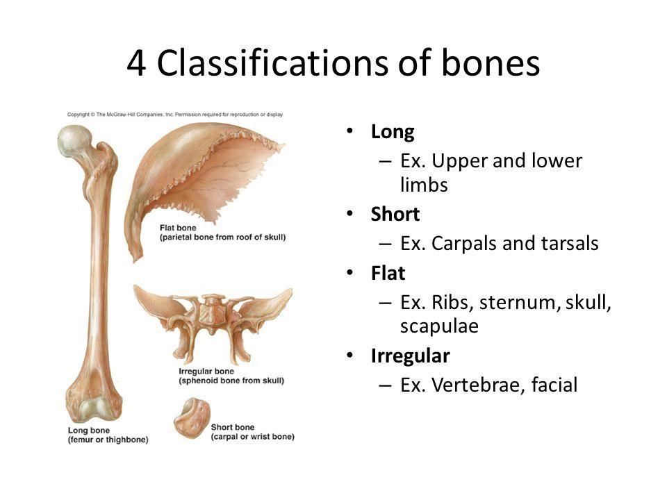 Sphenoid Bone Flat Or Irregular Tenderness