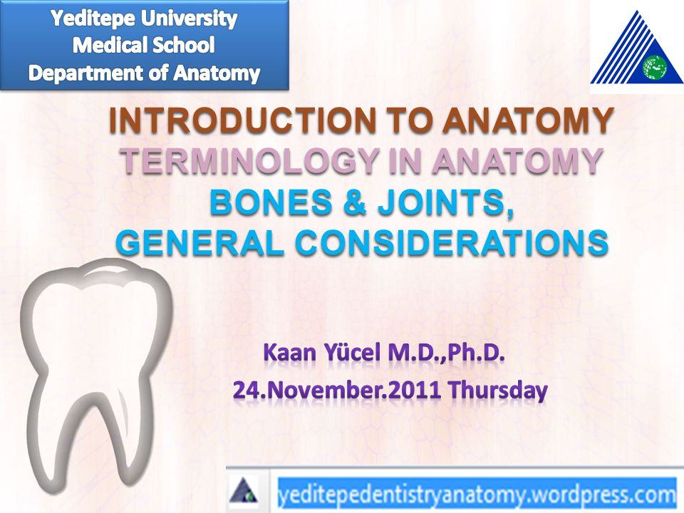 Introduction To Anatomy Terminology In Anatomy Bones Joints