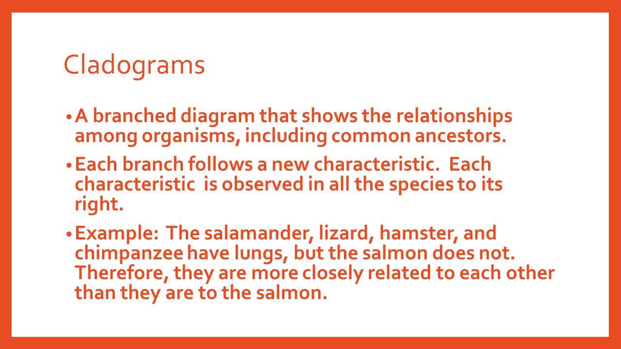 Creating cladograms worksheet key
