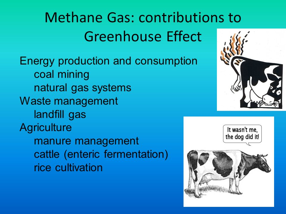 Methane Gas: contributions to Greenhouse Effect Energy production and consumption coal mining natural gas systems Waste management landfill gas Agriculture manure management cattle (enteric fermentation) rice cultivation