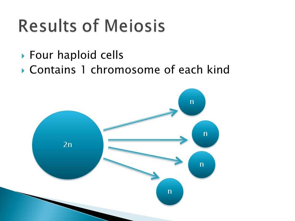  Four haploid cells  Contains 1 chromosome of each kind 2n n n n n n n n n