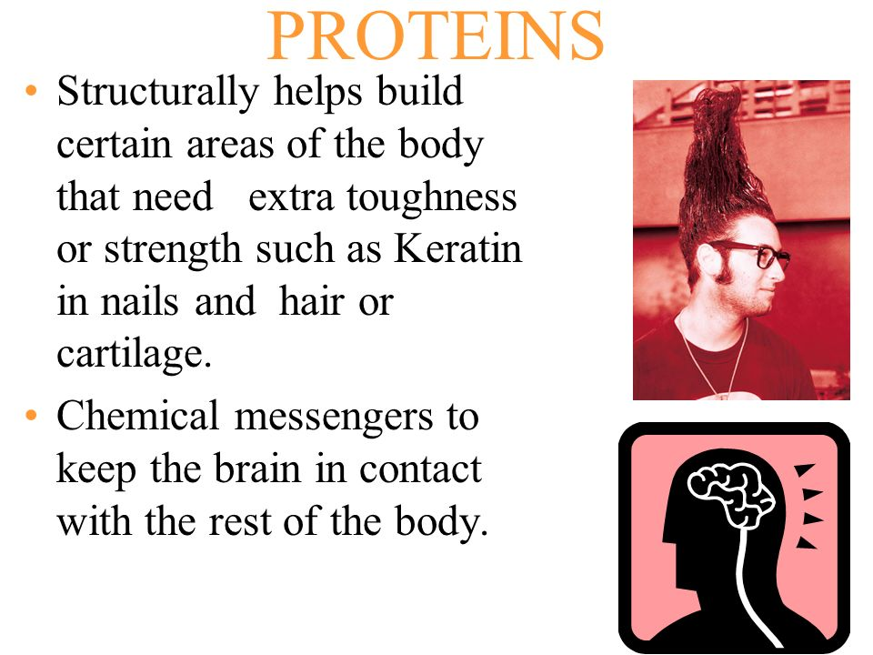 PROTEINS Structurally helps build certain areas of the body that need extra toughness or strength such as Keratin in nails and hair or cartilage.