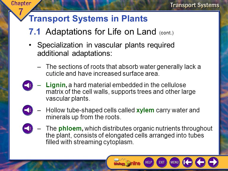 7.1 Adaptations for Life on Land 3 Different parts of a plant have different activities, all of which require materials that must be transported where needed.