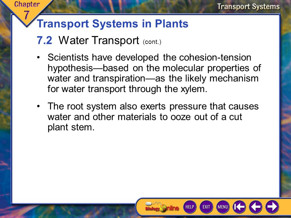 7.2 Water Transport 1 The xylem of flowering plants consists of two types of water- conducting cells, tracheids and vessel elements, plus strong weight-bearing fibers.