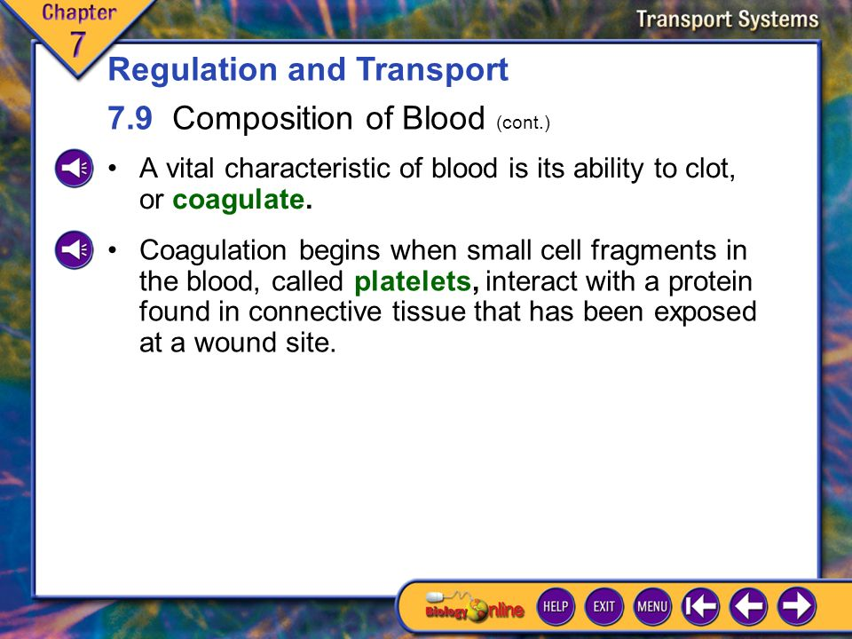 7.9 Composition of Blood 7 Some intercellular fluid is recycled into the circulatory system indirectly by the lymphatic system.