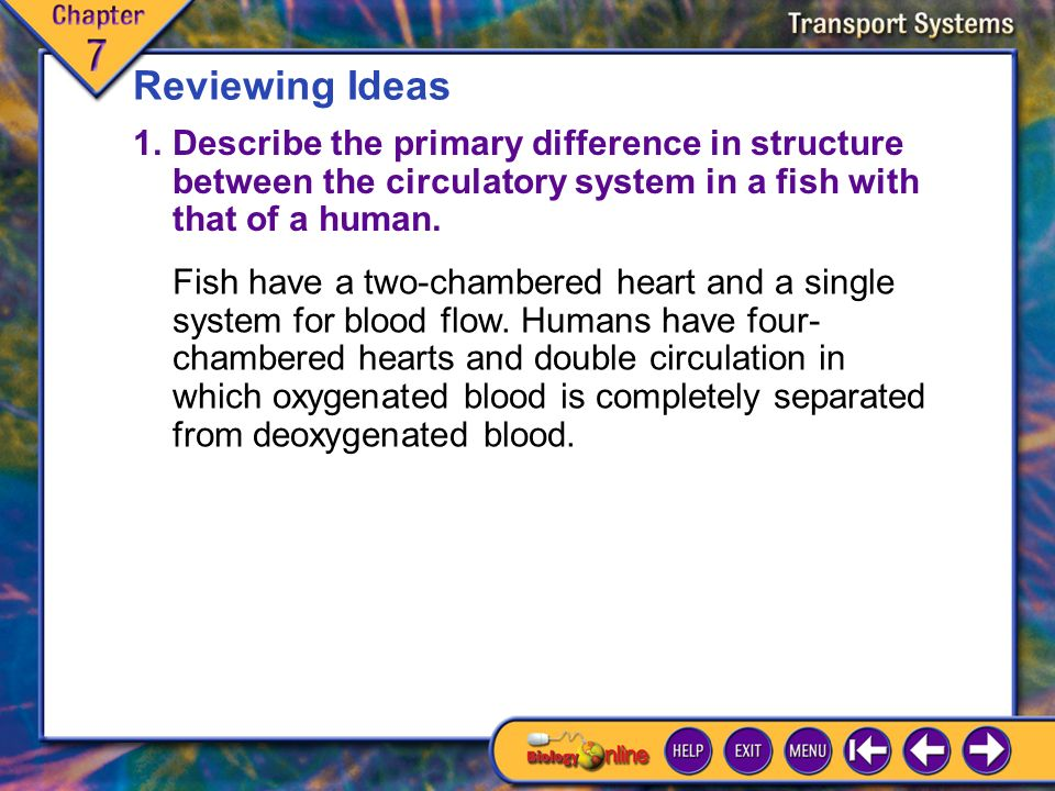 Chapter Highlights 3 Reviewing Key Terms Match the term on the left with the correct description.