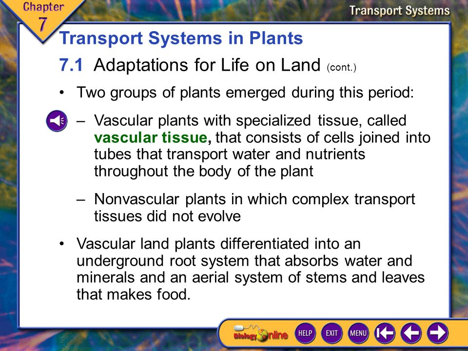 7.1 Adaptations for Life on Land 1 The first land plants probably evolved from green algae about 430 million years ago.