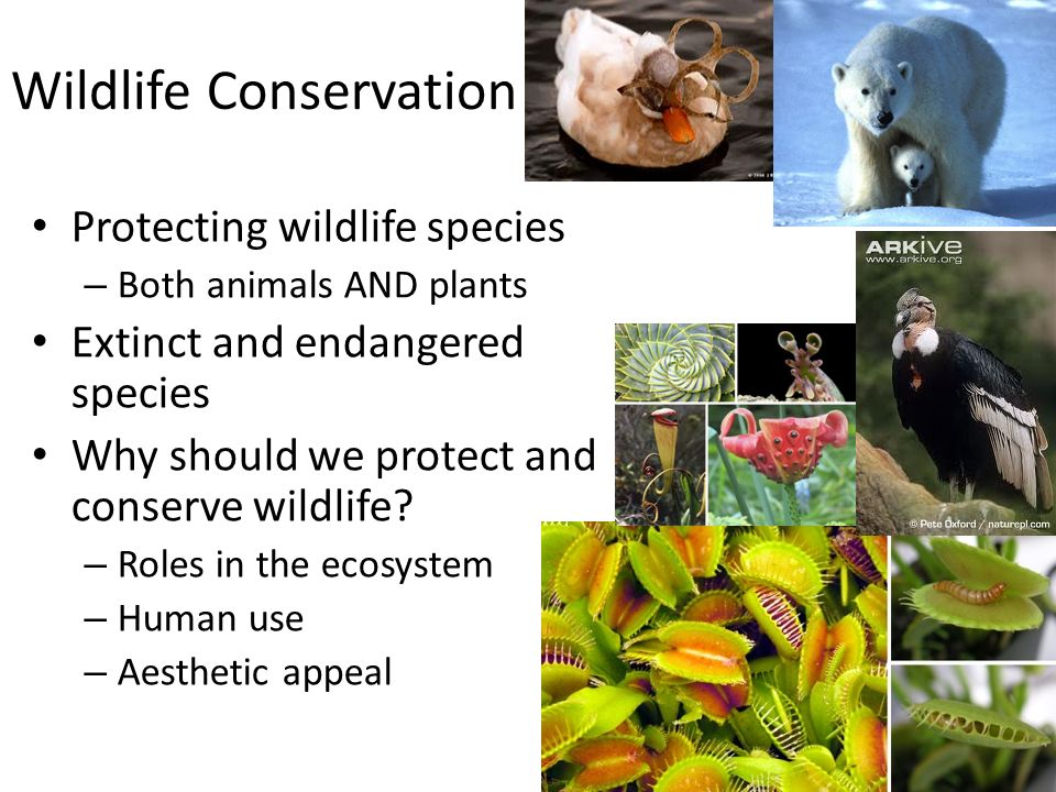 wildlife conservation essay
