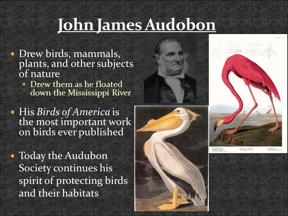 Drew birds, mammals, plants, and other subjects of nature Drew them as he floated down the Mississippi River His Birds of America is the most important work on birds ever published Today the Audubon Society continues his spirit of protecting birds and their habitats