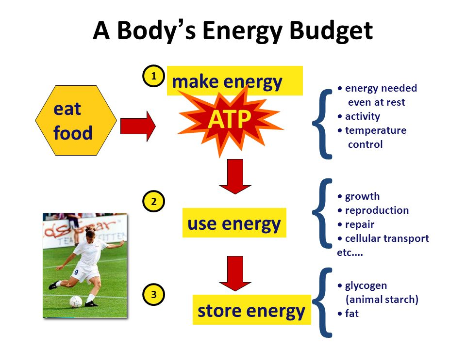 Can ' t store ATP  too unstable  only used in the cell that produces it  only short term energy storage  carbohydrates (ex.