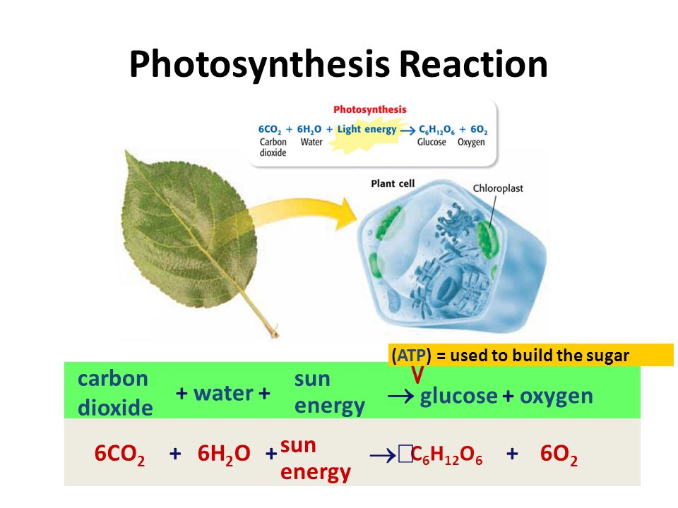 What do plants need for photosynthesis.