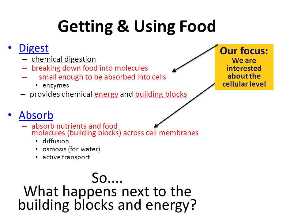 Getting & Using Food Ingest – taking in food Digest – mechanical digestion breaking up food into smaller pieces – chemical digestion breaking down food into molecules small enough to be absorbed into cells enzymes – provides chemical energy and building blocks Absorb – absorb nutrients and food molecules across cell membranes diffusion osmosis for water active transport Eliminate – undigested material passes out of body intracellular digestion extracellular digestion