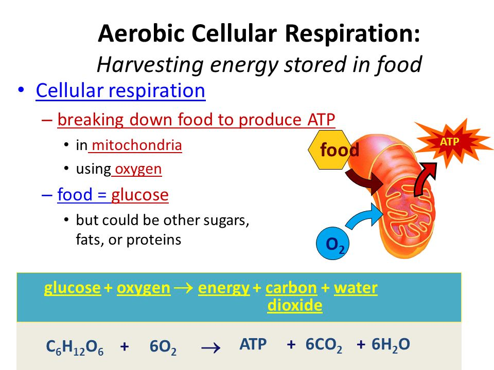 Getting & Using Food Digest – chemical digestion – breaking down food into molecules – small enough to be absorbed into cells enzymes – provides chemical energy and building blocks Absorb – absorb nutrients and food molecules (building blocks) across cell membranes diffusion osmosis (for water) active transport So....
