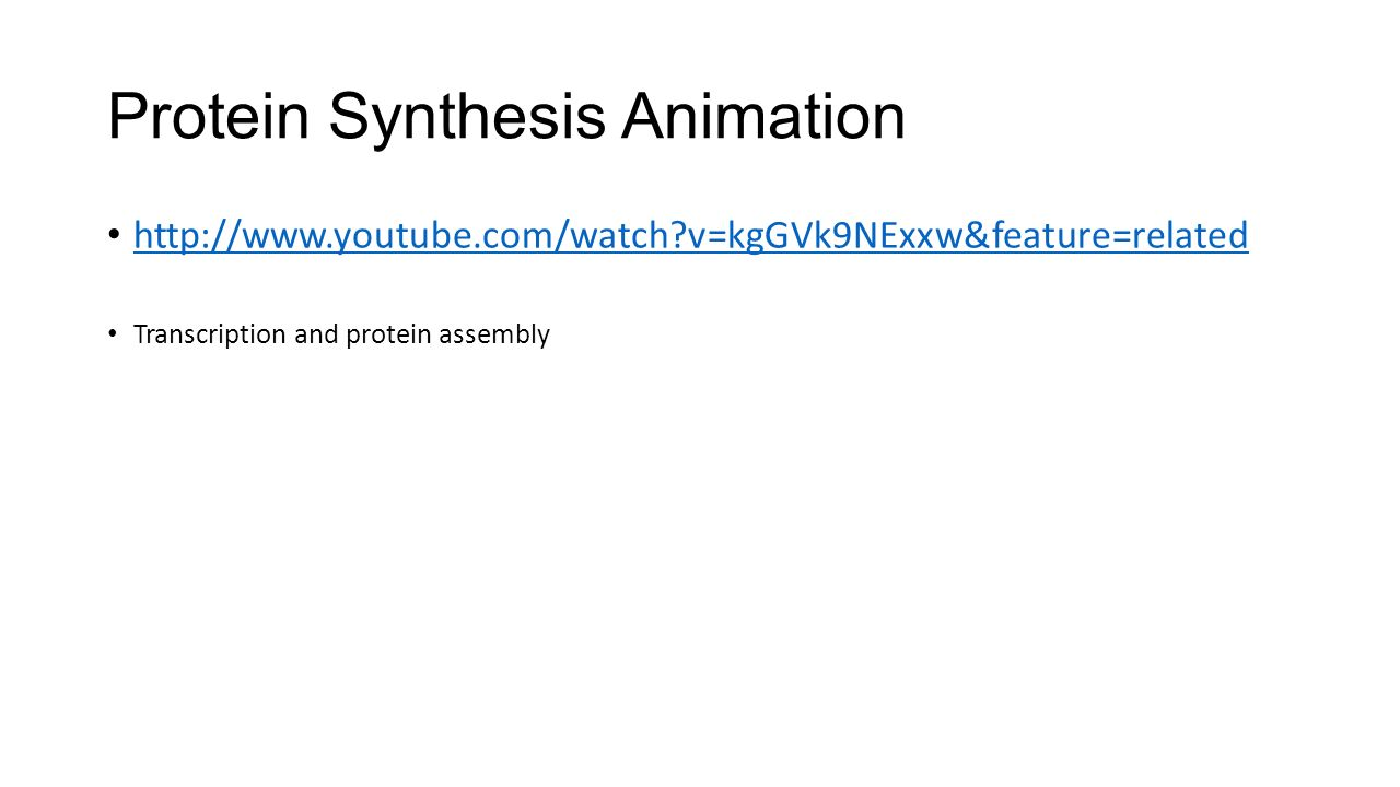 Protein Synthesis Animation   v=kgGVk9NExxw&feature=related Transcription and protein assembly