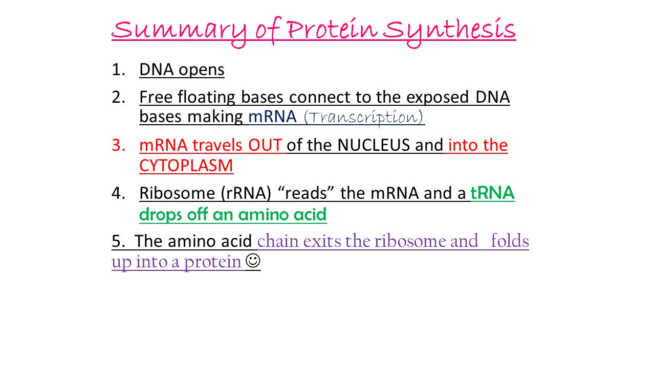 Summary of Protein Synthesis 1.DNA opens 2.Free floating bases connect to the exposed DNA bases making mRNA (Transcription) 3.mRNA travels OUT of the NUCLEUS and into the CYTOPLASM 4.Ribosome (rRNA) reads the mRNA and a tRNA drops off an amino acid 5.