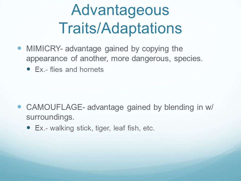 Advantageous Traits/Adaptations MIMICRY- advantage gained by copying the appearance of another, more dangerous, species.