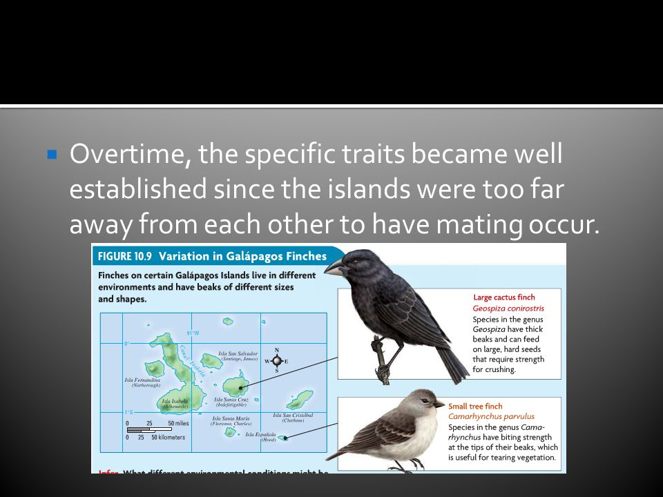  Overtime, the specific traits became well established since the islands were too far away from each other to have mating occur.