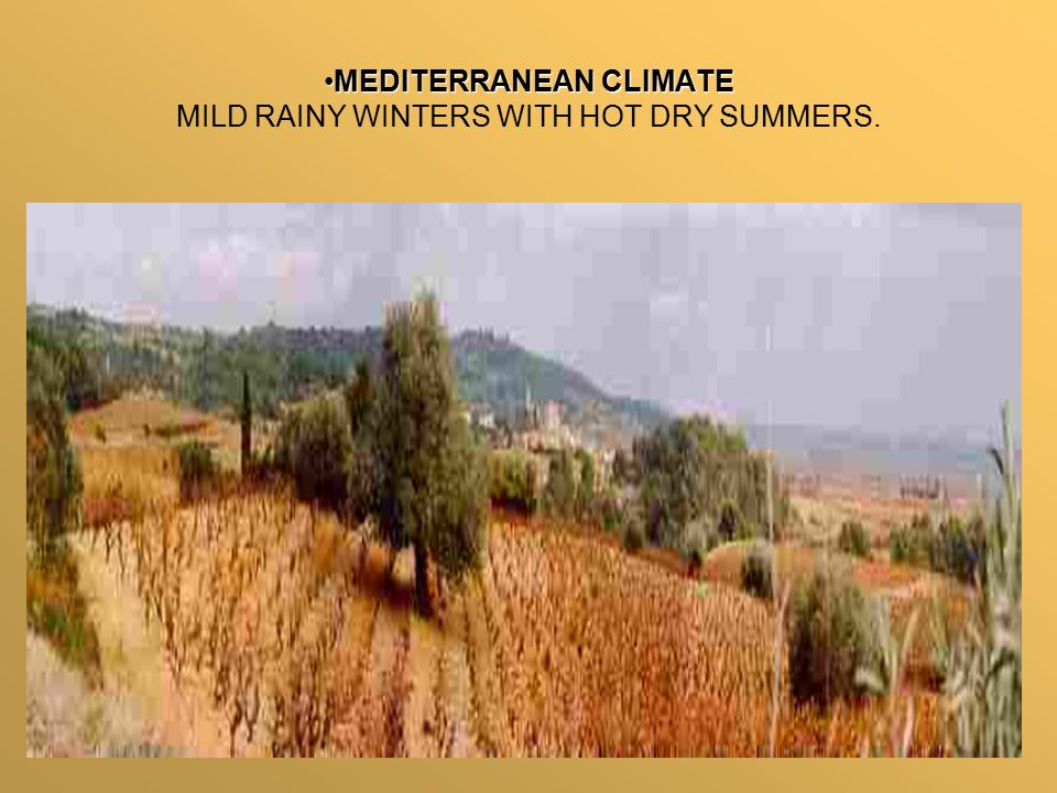 MEDITERRANEAN CLIMATEMEDITERRANEAN CLIMATE MILD RAINY WINTERS WITH HOT DRY SUMMERS.