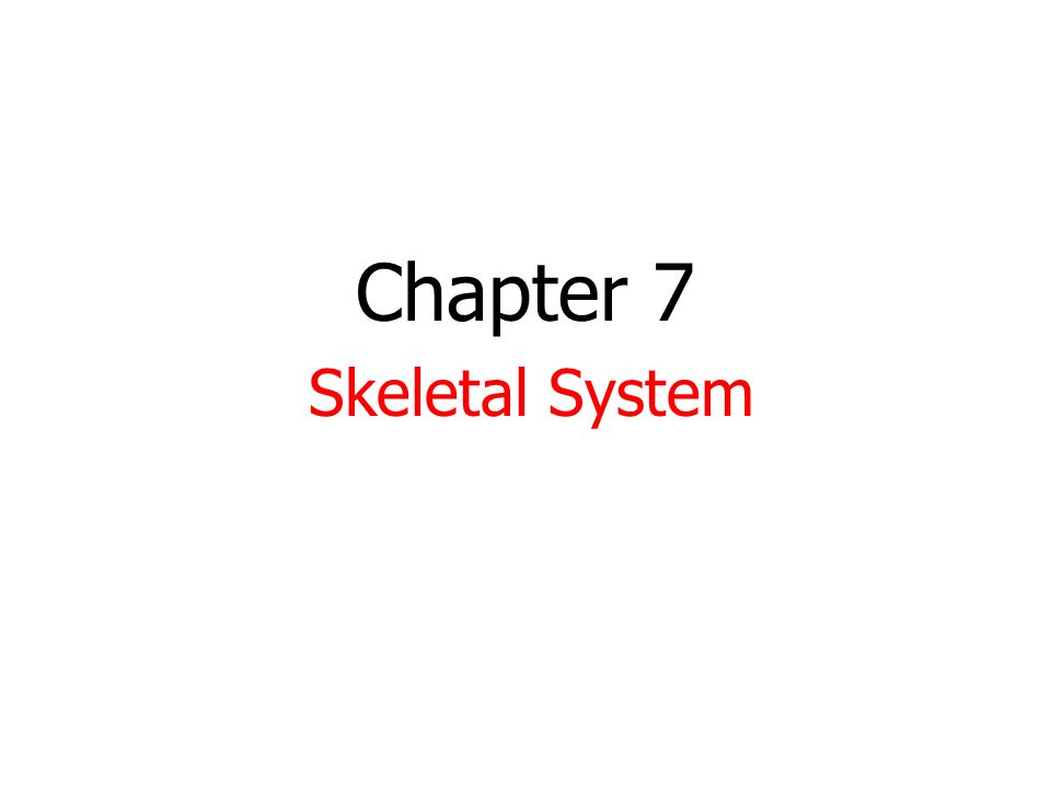Chapter 7 Skeletal System. HW-None 1. Take out notes. 2. Do not get ...