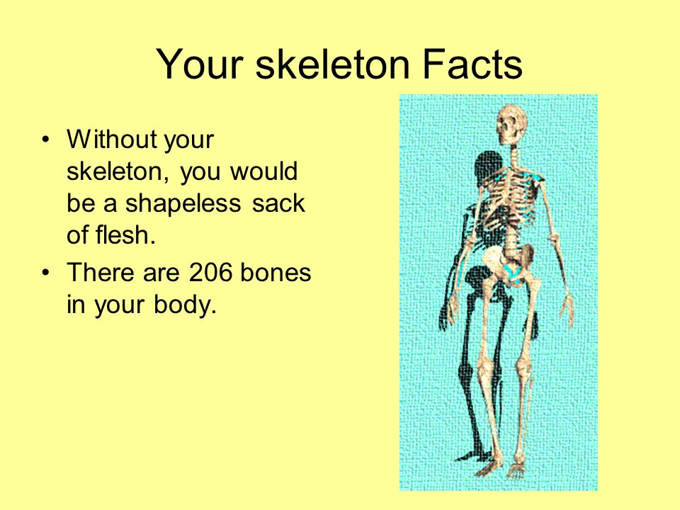 the skeletal system. - ppt download, Muscles