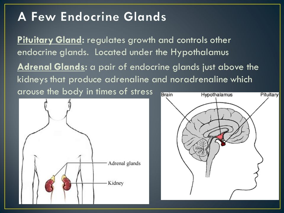 Pituitary Gland: regulates growth and controls other endocrine glands.