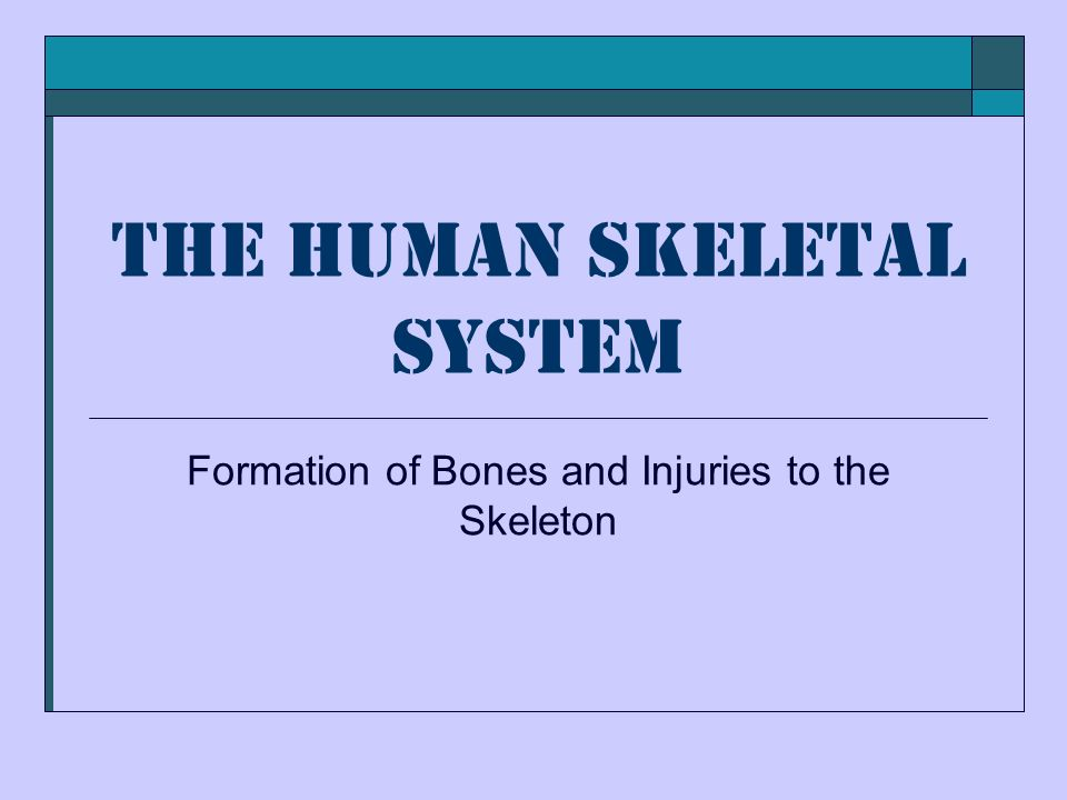 The Human Skeletal System Formation of Bones and Injuries to the Skeleton