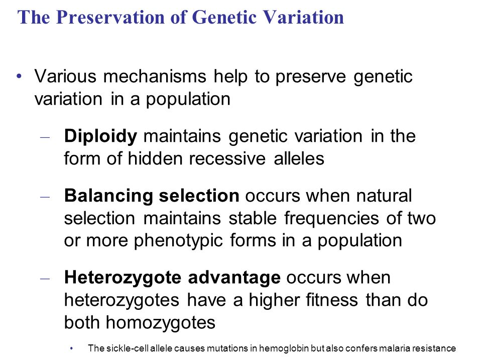 The Preservation of Genetic Variation Various mechanisms help to preserve genetic variation in a population – Diploidy maintains genetic variation in the form of hidden recessive alleles – Balancing selection occurs when natural selection maintains stable frequencies of two or more phenotypic forms in a population – Heterozygote advantage occurs when heterozygotes have a higher fitness than do both homozygotes The sickle-cell allele causes mutations in hemoglobin but also confers malaria resistance