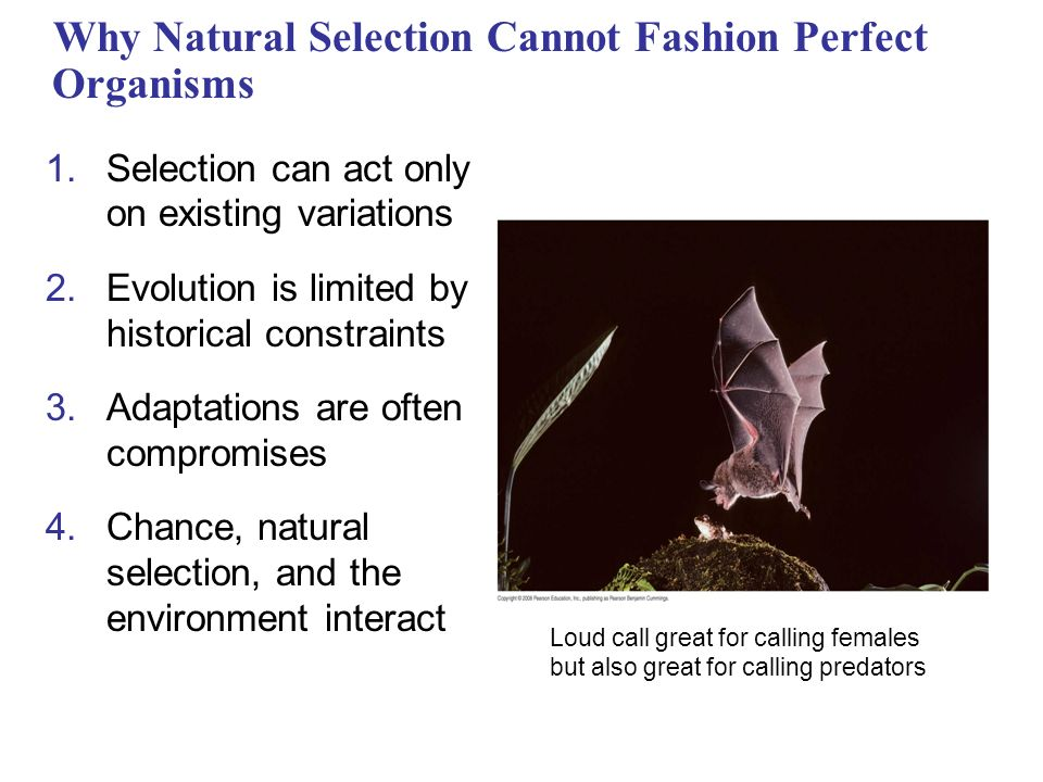 Why Natural Selection Cannot Fashion Perfect Organisms 1.Selection can act only on existing variations 2.Evolution is limited by historical constraints 3.Adaptations are often compromises 4.Chance, natural selection, and the environment interact Loud call great for calling females but also great for calling predators