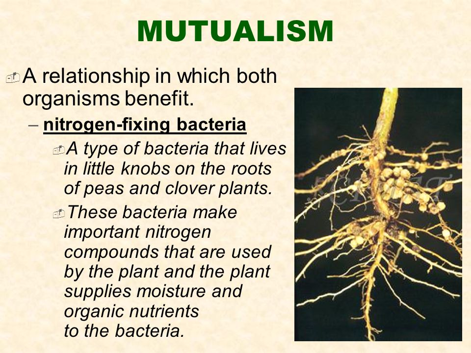 MUTUALISM  A relationship in which both organisms benefit.