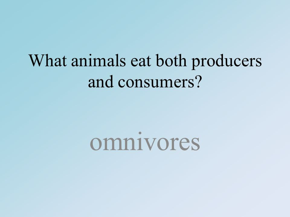 What animals eat both producers and consumers omnivores