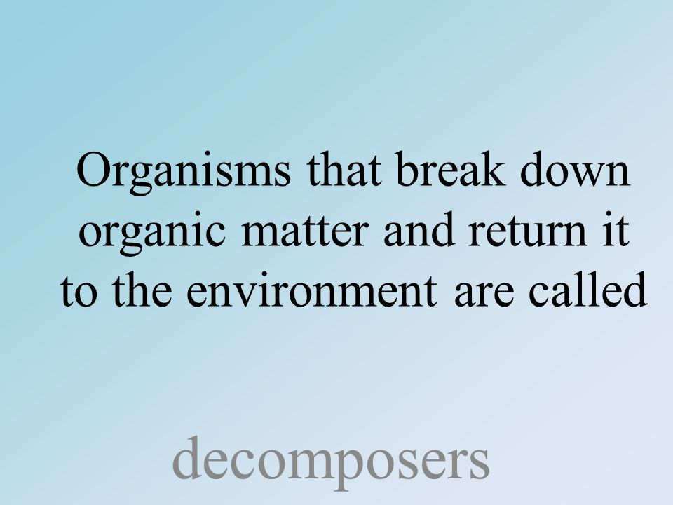 Organisms that break down organic matter and return it to the environment are called decomposers