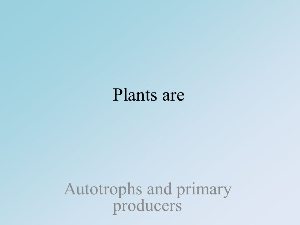 Plants are Autotrophs and primary producers