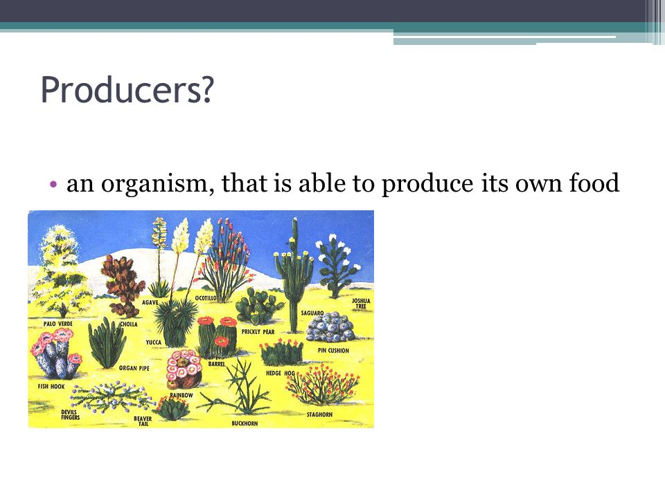 Producers an organism, that is able to produce its own food