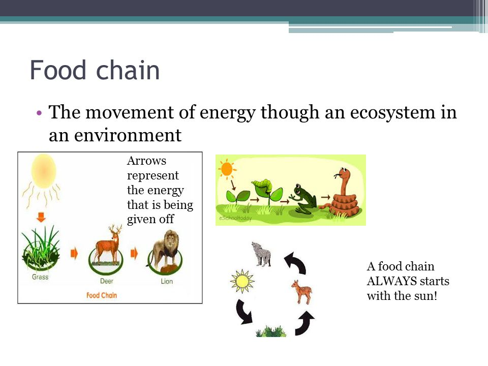 Food chain The movement of energy though an ecosystem in an environment A food chain ALWAYS starts with the sun.