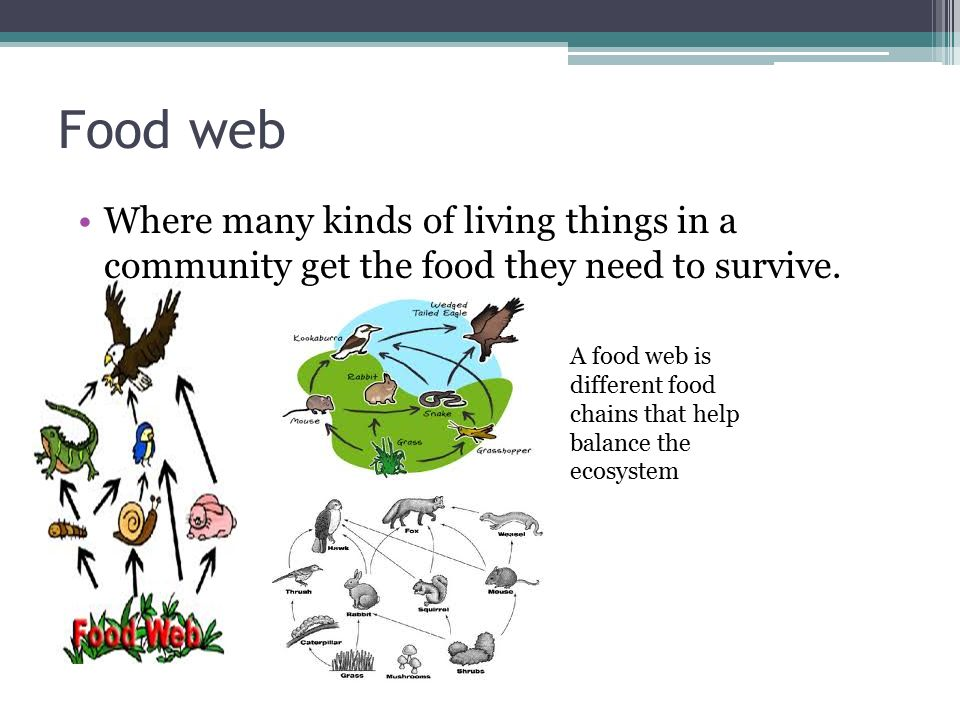 Food web Where many kinds of living things in a community get the food they need to survive.