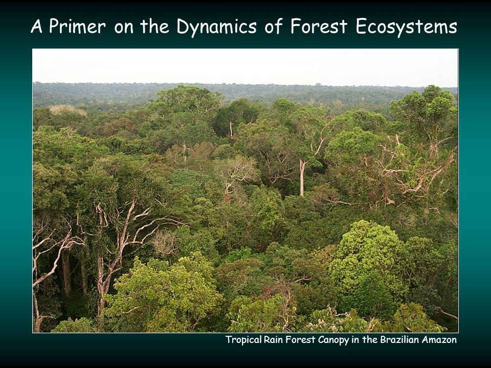 A Primer on the Dynamics of Forest Ecosystems Tropical Rain Forest Canopy in the Brazilian Amazon