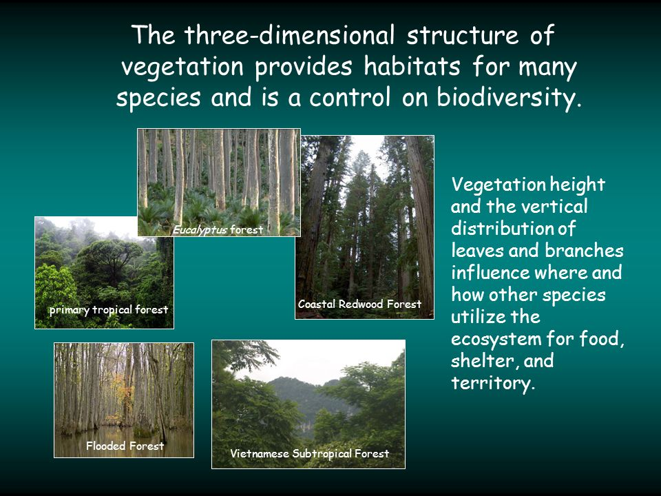 The three-dimensional structure of vegetation provides habitats for many species and is a control on biodiversity.