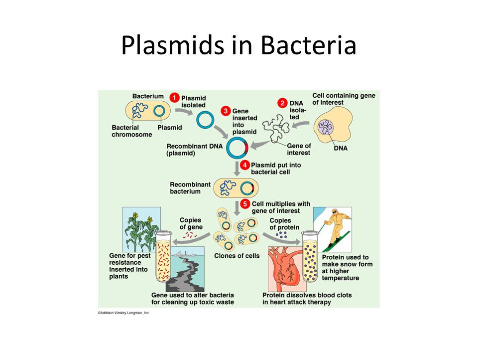Plasmids in Bacteria