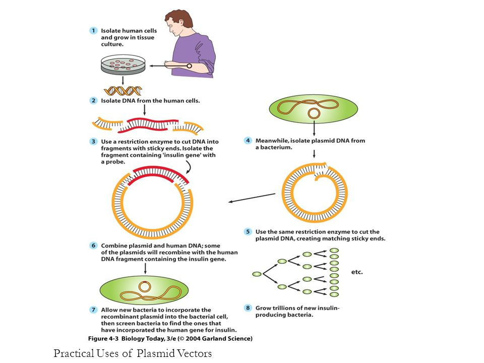 Figure 4.3 Practical Uses of Plasmid Vectors