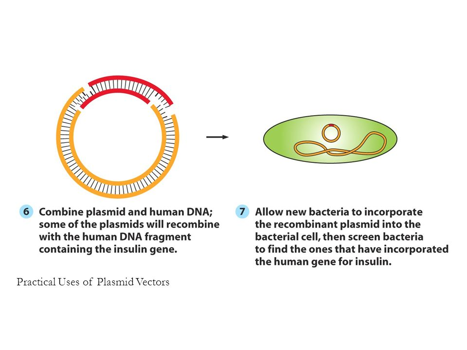 Figure 4.3 (3) Practical Uses of Plasmid Vectors