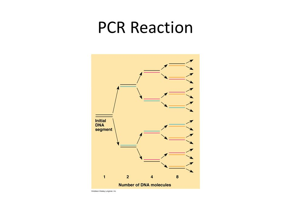 PCR Reaction