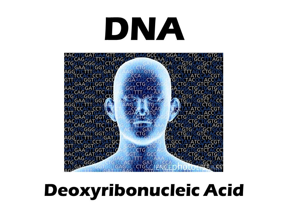 DNA Deoxyribonucleic Acid