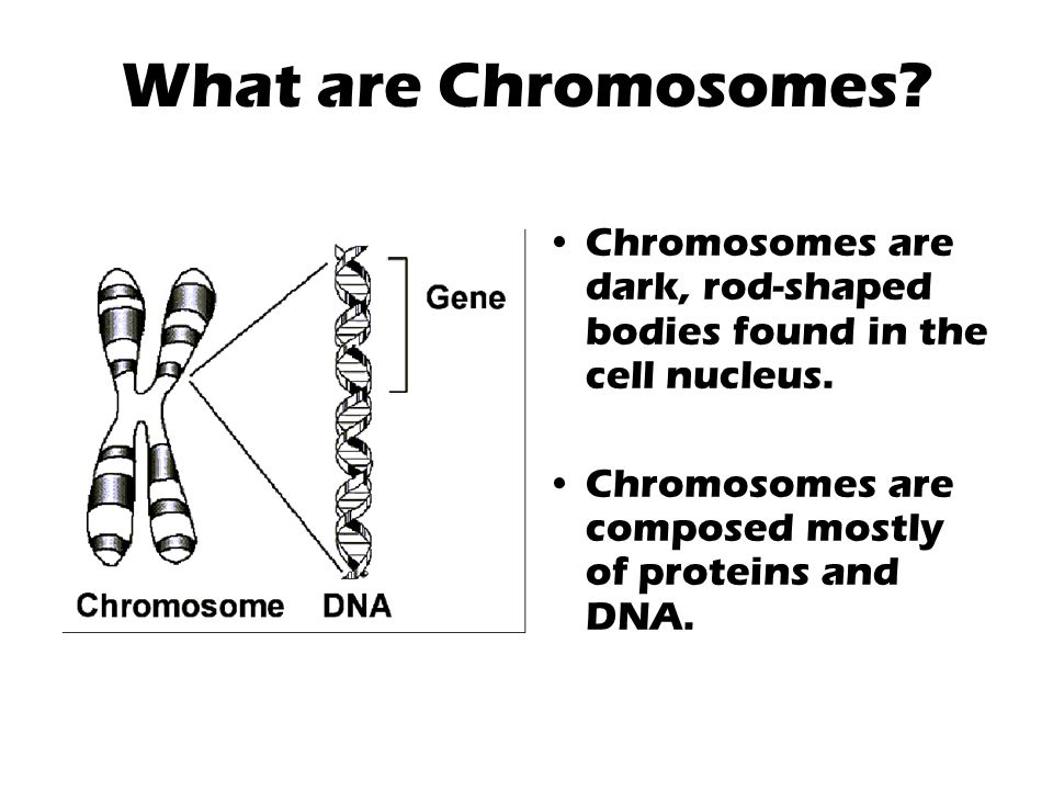 What are Chromosomes. Chromosomes are dark, rod-shaped bodies found in the cell nucleus.