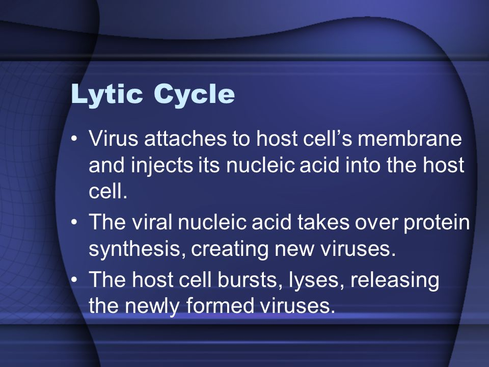 Lytic Cycle Virus attaches to host cell's membrane and injects its nucleic acid into the host cell.