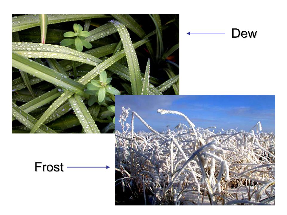Dew Frost