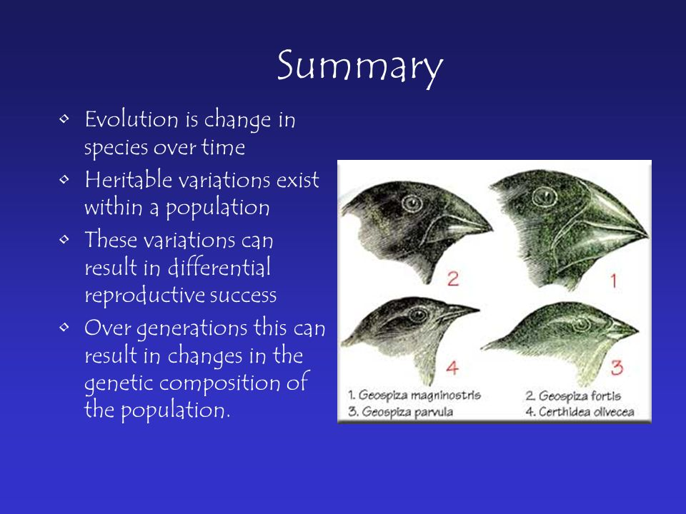 Summary Evolution is change in species over time Heritable variations exist within a population These variations can result in differential reproductive success Over generations this can result in changes in the genetic composition of the population.
