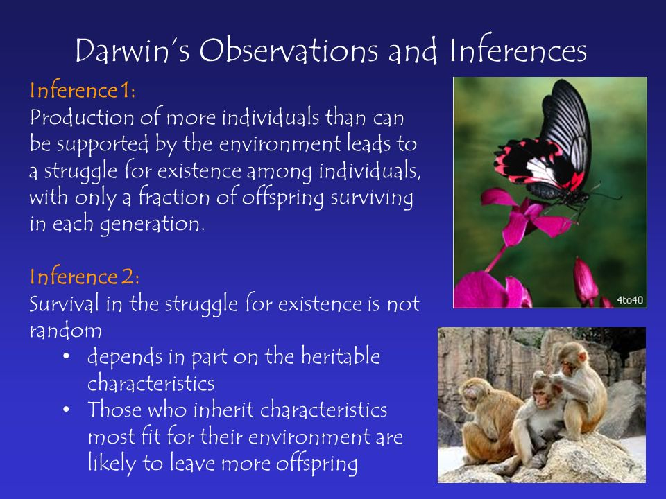 Darwin's Observations and Inferences Inference 1: Production of more individuals than can be supported by the environment leads to a struggle for existence among individuals, with only a fraction of offspring surviving in each generation.