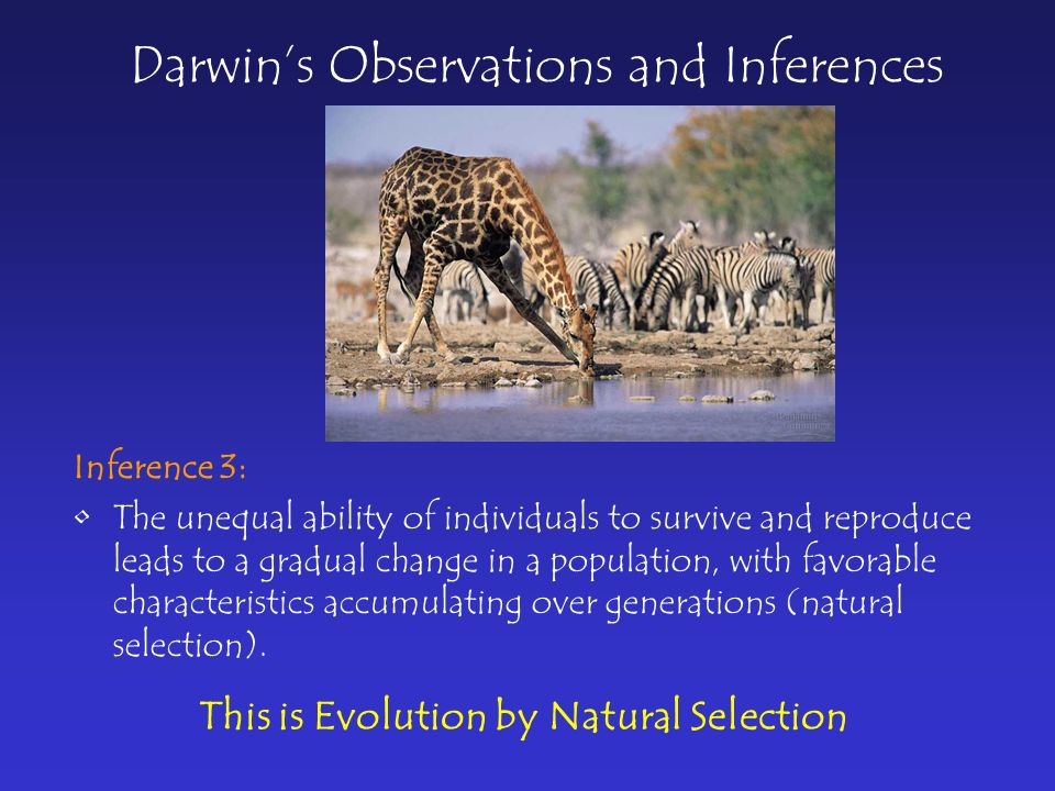 Darwin's Observations and Inferences Inference 3: The unequal ability of individuals to survive and reproduce leads to a gradual change in a population, with favorable characteristics accumulating over generations (natural selection).