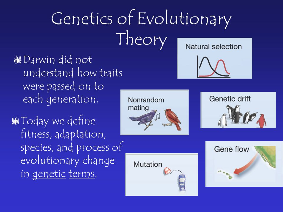 Genetics of Evolutionary Theory  Darwin did not understand how traits were passed on to each generation.